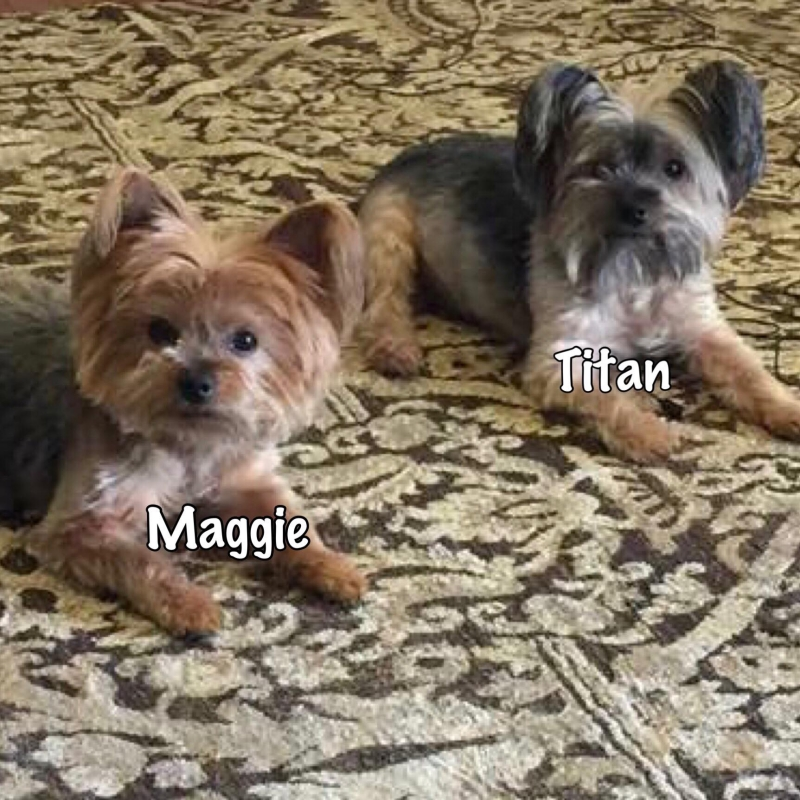 Titan and Maggie the little dogs
